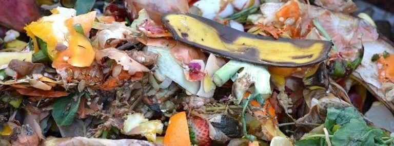 residuos organico